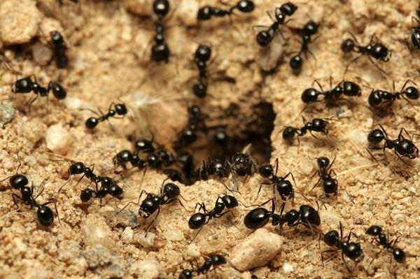 Pour éviter l'infestation des fourmis et des punaises de lits