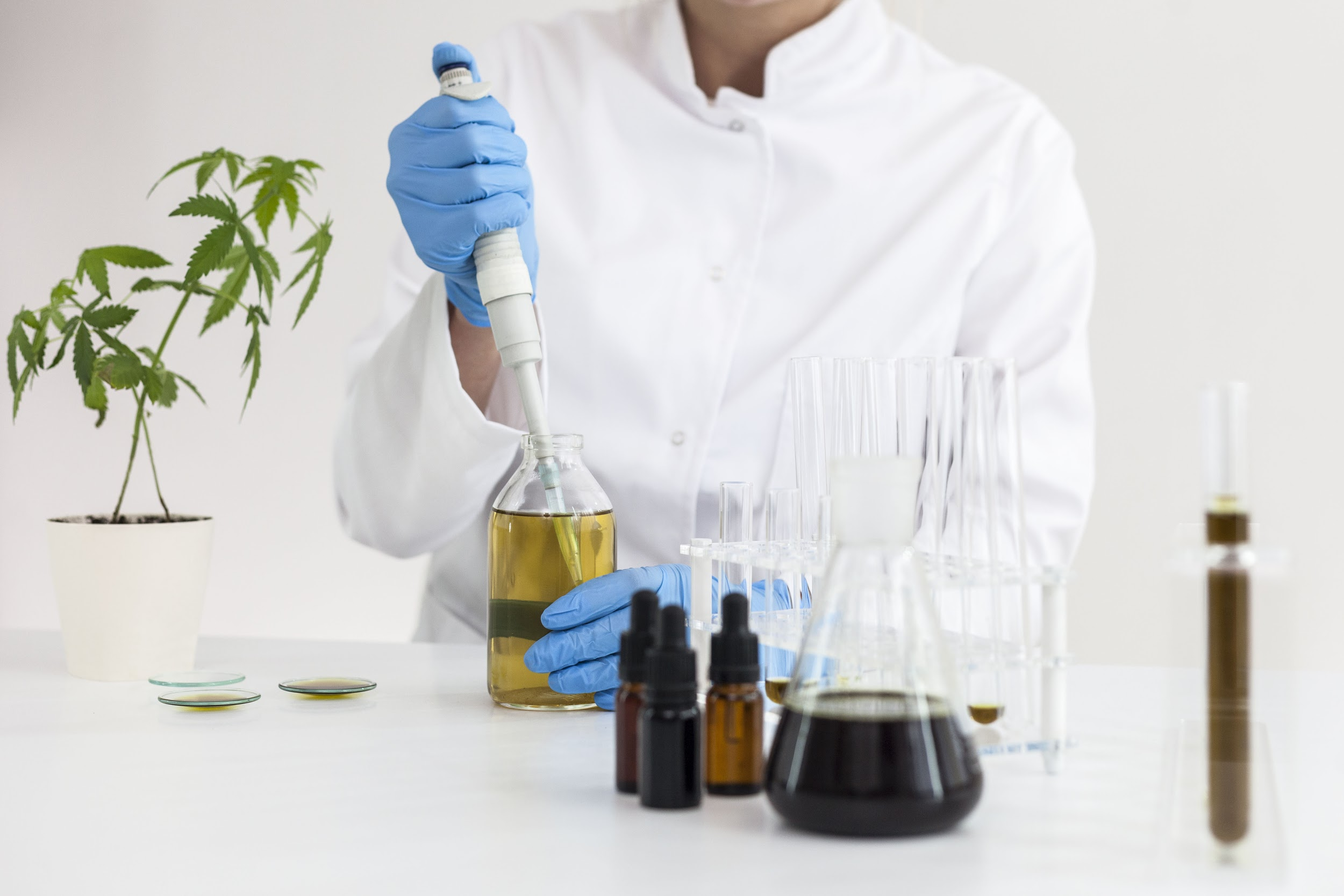 What You Should Know Before Starting Your Own CBD Company